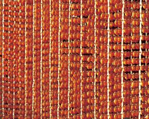 柿の写真素材 [FYI03934356]