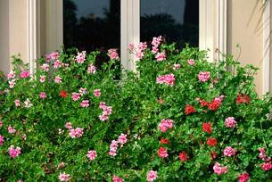 窓から飾った花の写真素材 [FYI03936291]