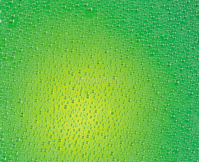 水滴の写真素材 [FYI03937651]