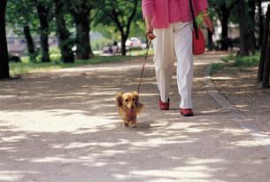 犬の散歩の写真素材 [FYI03937758]