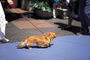 犬の散歩の写真素材 [FYI03937779]