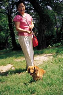 犬の散歩の写真素材 [FYI03937787]