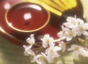 お花見イメージの写真素材 [FYI03938649]
