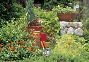 庭の写真素材 [FYI03939804]