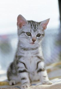 猫の写真素材 [FYI03939924]