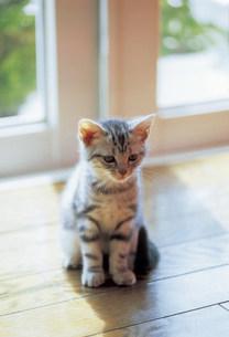 猫の写真素材 [FYI03939936]