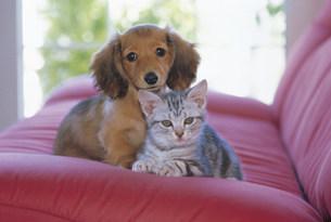 猫と犬の写真素材 [FYI03939941]