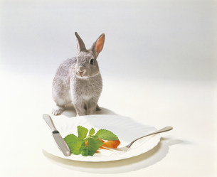 ウサギの写真素材 [FYI03939946]