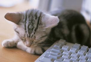 猫の写真素材 [FYI03939969]