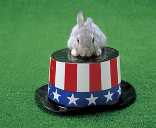 ウサギの写真素材 [FYI03939984]