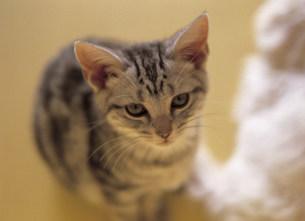 猫の写真素材 [FYI03939987]