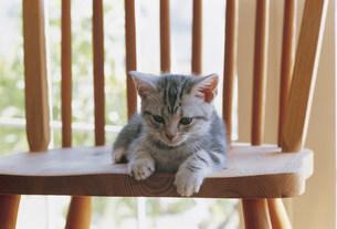 猫の写真素材 [FYI03939998]