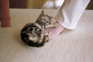 猫の写真素材 [FYI03939999]