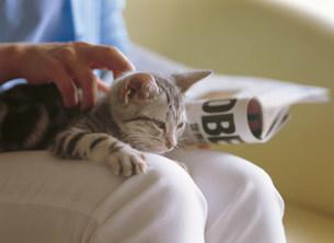 猫の写真素材 [FYI03940003]