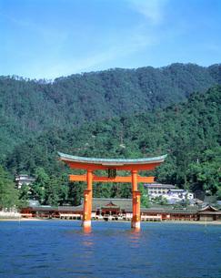 厳島神社と大鳥居の写真素材 [FYI03940308]