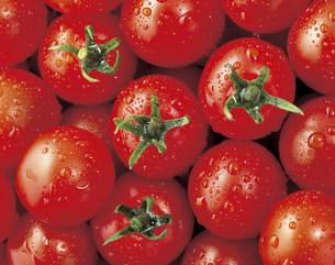 プチトマトの写真素材 [FYI03941374]
