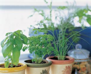 家庭菜園の写真素材 [FYI03941590]