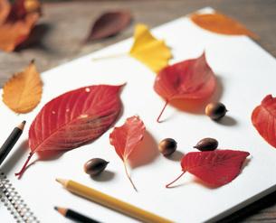 スケッチブックの上に置いた落ち葉とどんぐりの写真素材 [FYI03941631]