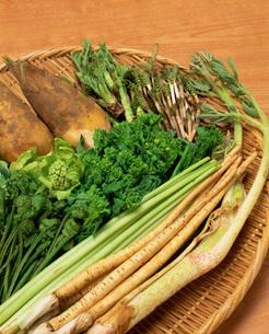 春野菜の集合の写真素材 [FYI03942079]