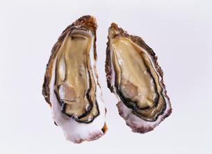 殻付き牡蠣の写真素材 [FYI03942148]