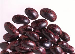 紫花豆の写真素材 [FYI03942166]