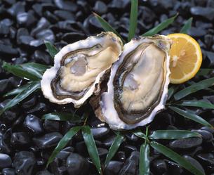 殻付き牡蠣の写真素材 [FYI03942219]