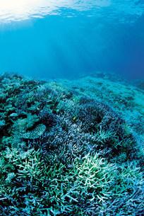 珊瑚の写真素材 [FYI03942484]