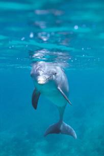 イルカの写真素材 [FYI03942494]
