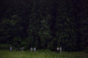 群れて飛ぶゲンジボタルとヘイケボタル ホタル狩りを楽しむ人達の写真素材 [FYI03943167]