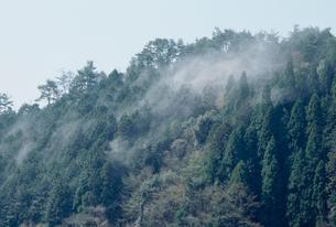 杉とヒノキの花粉の写真素材 [FYI03943174]