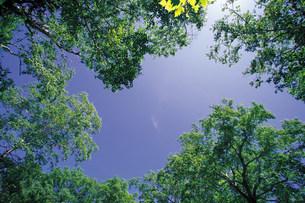 樹木の写真素材 [FYI03943267]