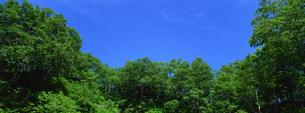 樹木の写真素材 [FYI03943272]
