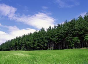 樹木の写真素材 [FYI03943273]