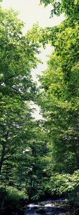 新緑の写真素材 [FYI03943274]