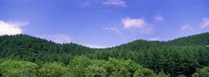森林の写真素材 [FYI03943276]