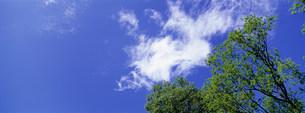 樹木の写真素材 [FYI03943277]