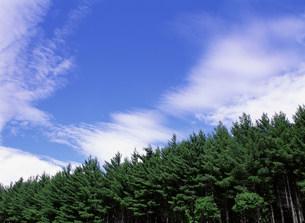 樹木の写真素材 [FYI03943278]