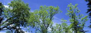 樹木の写真素材 [FYI03943279]