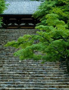 新緑と神護寺の石段の写真素材 [FYI03943466]