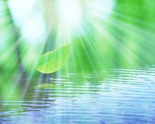 水面と葉の写真素材 [FYI03943490]