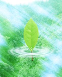 水面と葉の写真素材 [FYI03943492]