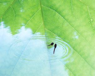 水面と葉の写真素材 [FYI03943494]