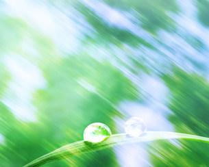 水滴の写真素材 [FYI03943502]