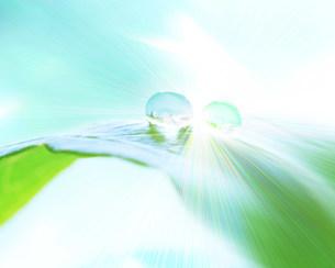 水滴の写真素材 [FYI03943503]