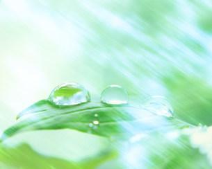 水滴の写真素材 [FYI03943504]