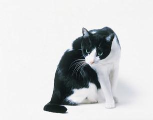 猫の写真素材 [FYI03943567]