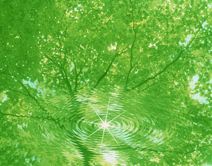 新緑イメージの写真素材 [FYI03943569]