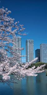 浜離宮庭園より望む桜とシオサイトの写真素材 [FYI03943574]