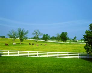 白い柵と馬の写真素材 [FYI03943597]