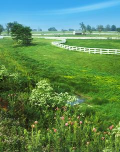 白い柵のある草地の写真素材 [FYI03943601]